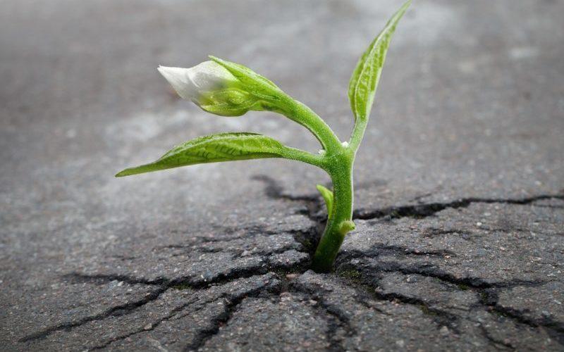 Piccole piante crescono